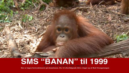 Red Orangutangen 2015